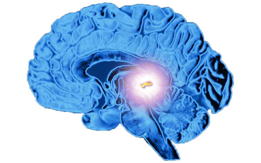 What is the Pineal Gland\'s Function and How to Amplify It ...